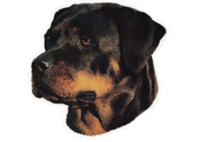 Bilde av Rottweiler klistremerke