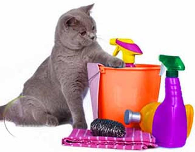 Bilde av Rent hus med katt